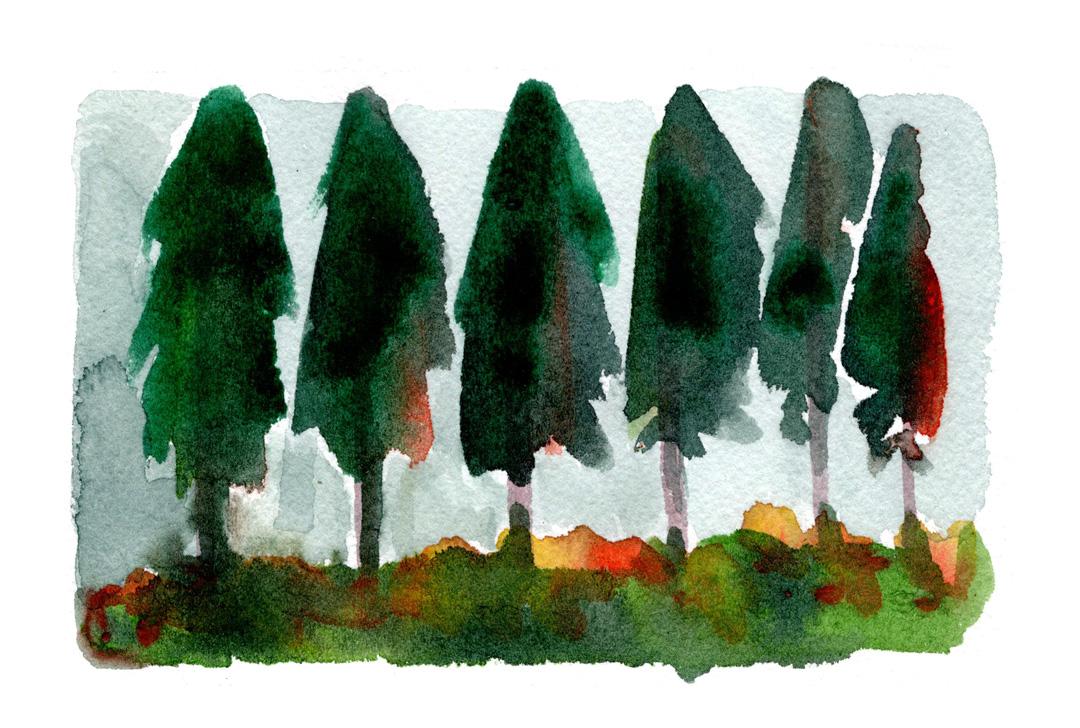 Rich color watercolor line of pine trees.